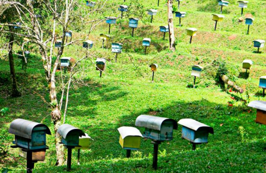 marleiturismo-marlei-turismo-cidade-das-abelhas-3.jpg