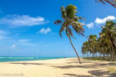 marlei-turismo-marleiturismo-maceio-coqueiro-na-praia.jpg