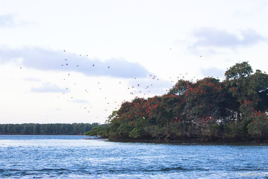 Rota-das-Emoções-Delta-do-Parnaíba-revoada-dos-guaras-marlei-turismo-marleiturismo.jpg