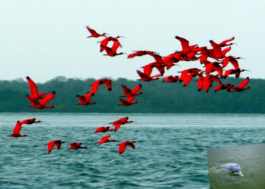 ave-guara-vermelho-delta-parnaiba-marlei-turismo-marleiturismo-rota-das-emocoes.jpg